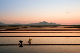 角田山と田園風景の夕景の写真素材 [FYI01630194]