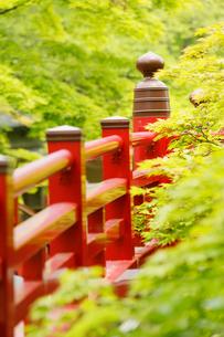新緑の弥彦公園の観月橋の写真素材 [FYI01630229]
