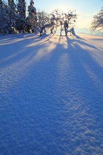 朝日と雪原の写真素材 [FYI01630240]