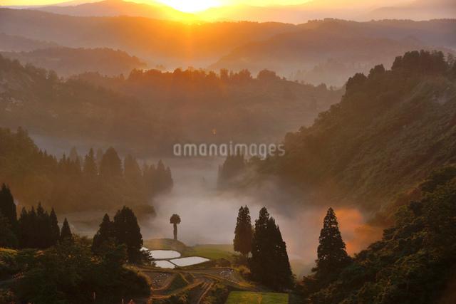 朝もやに包まれた棚田と山並みの写真素材 [FYI01630282]
