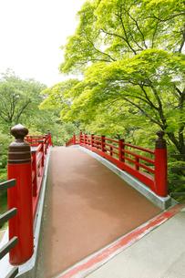 新緑の弥彦公園の観月橋の写真素材 [FYI01630310]