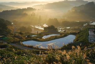 稲刈り後の棚田とススキの写真素材 [FYI01630319]