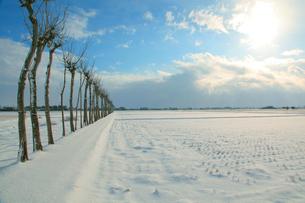 雪の田園風景とはさ木並木の写真素材 [FYI01630321]
