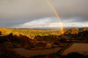 秋の棚田と虹の写真素材 [FYI01630344]