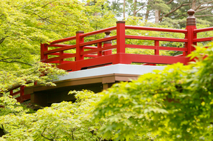 新緑の弥彦公園の観月橋の写真素材 [FYI01630404]