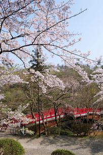 観月橋と桜の写真素材 [FYI01630499]
