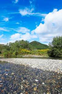 秋の三面川の写真素材 [FYI01630516]