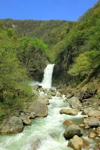 春の苗名滝の写真素材 [FYI01630549]