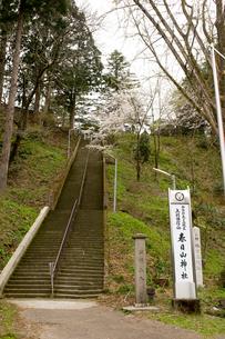 桜と参道の写真素材 [FYI01630550]