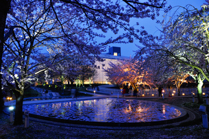 夕景の新潟市民芸術文化会館と桜の写真素材 [FYI01630564]
