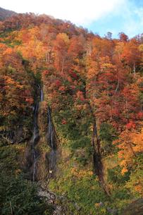 秋のそうめん滝の写真素材 [FYI01630567]