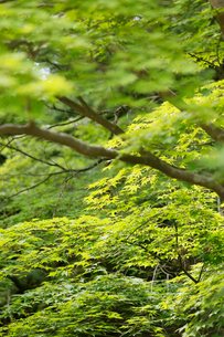 新緑イメージの写真素材 [FYI01630585]