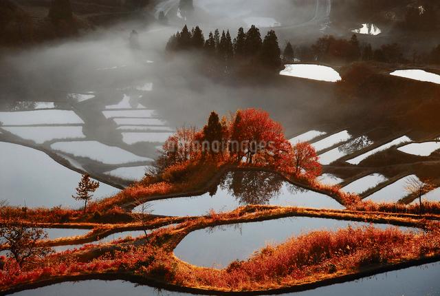 秋の棚田の写真素材 [FYI01630626]