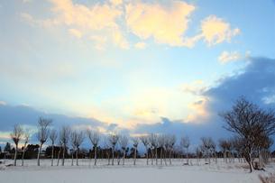 冬の田園風景とハサ木の写真素材 [FYI01630639]