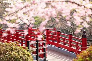 観月橋と桜の写真素材 [FYI01630644]