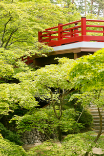新緑の弥彦公園の観月橋の写真素材 [FYI01630647]