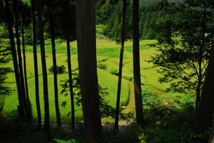 林の中から見た棚田の写真素材 [FYI01630668]
