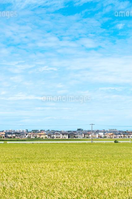 秋の田園風景と街並みの写真素材 [FYI01630687]