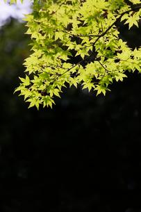 新緑イメージの写真素材 [FYI01630726]