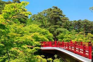弥彦公園の観月橋の写真素材 [FYI01630758]