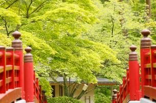 新緑の弥彦公園の観月橋の写真素材 [FYI01630761]