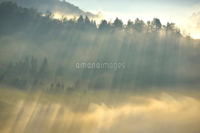 朝もやと光芒の写真素材 [FYI01630775]
