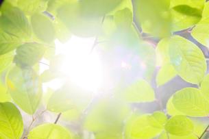新緑イメージの写真素材 [FYI01630793]