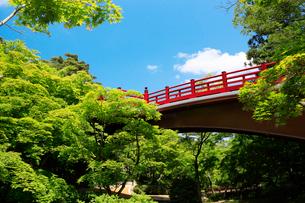 弥彦公園の観月橋の写真素材 [FYI01630803]