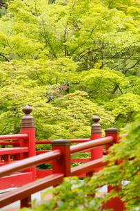 新緑の弥彦公園の観月橋の写真素材 [FYI01630838]