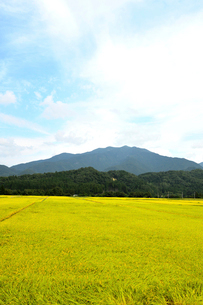 秋の田園風景の写真素材 [FYI01630847]