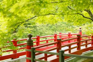 新緑の弥彦公園の観月橋の写真素材 [FYI01630936]