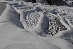 雪の棚田の写真素材 [FYI01631034]