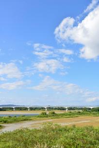 フェニックス大橋と信濃川の写真素材 [FYI01631038]