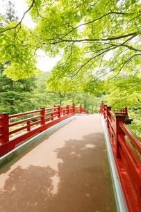 新緑の弥彦公園の観月橋の写真素材 [FYI01631091]