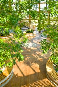 新潟市食育・花育センター内のアトリウムの写真素材 [FYI01631100]