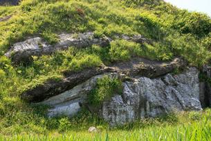 塩掛鼻とミオジプシナ石灰砂岩の写真素材 [FYI01631125]