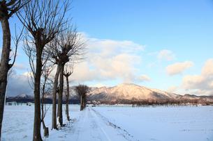 雪の弥彦山とハサ木並木の写真素材 [FYI01631136]