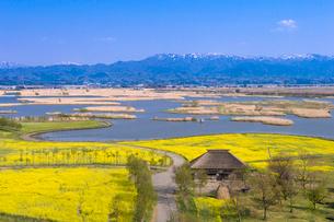 福島潟と菜の花畑の写真素材 [FYI01631174]