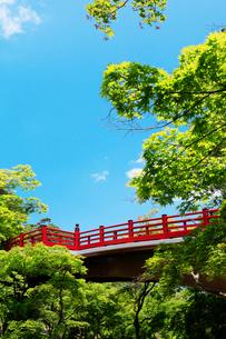 弥彦公園の観月橋の写真素材 [FYI01631180]