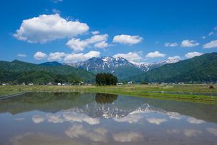 田植え前の水田と八海山の写真素材 [FYI01631184]