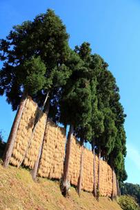 ハサ掛け風景の写真素材 [FYI01631201]