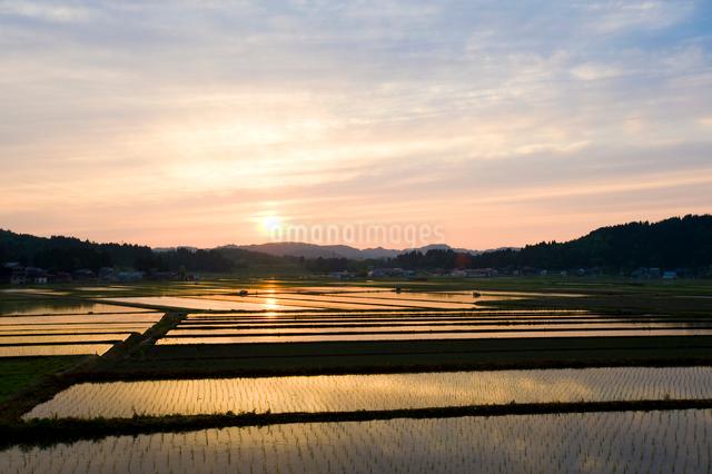 夕焼けに染まる田植え後の水田の写真素材 [FYI01631205]