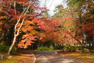 秋の弥彦公園の写真素材 [FYI01631241]