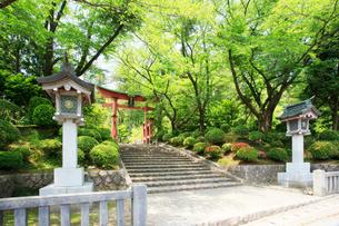 弥彦神社桜苑の鳥居の写真素材 [FYI01631260]