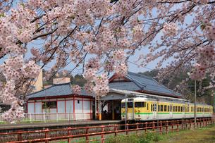 電車と桜の写真素材 [FYI01631290]
