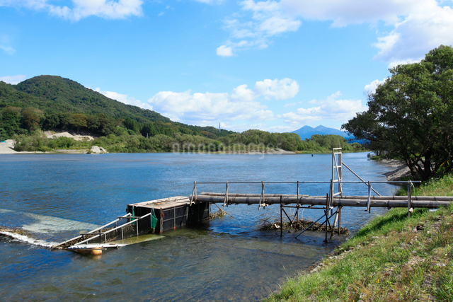三面川の鮭漁の仕掛けの写真素材 [FYI01631326]