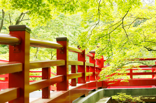 新緑の弥彦公園の観月橋の写真素材 [FYI01631341]