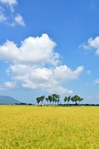 秋の田園風景とハサ木の写真素材 [FYI01631368]