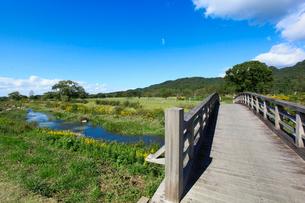 三面川中州公園の写真素材 [FYI01631374]