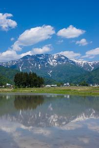 田植え前の水田と八海山の写真素材 [FYI01631376]